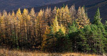 Ein schönes Stück Wald mit Herbstfarben in den schottischen Highlands von Guido Boogert