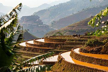 De rijstvelden in Vietnam van