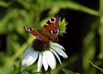 Vlinder op bloem van Annemarie Kroon