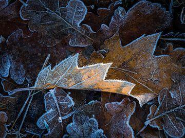 Dood blad na nachtvorst. van Ron Poot