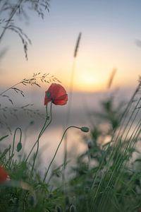 Blumen Teil 154 von Tania Perneel