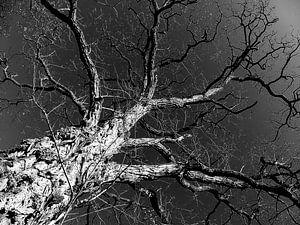 Grillige takken van een boom