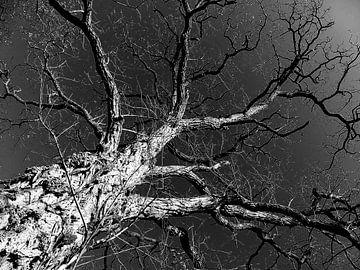 Kunstlerische Baum von Jessica Berendsen