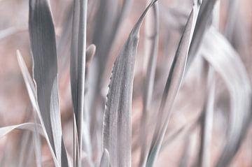 Silbertöne im Garten von Violetta Honkisz