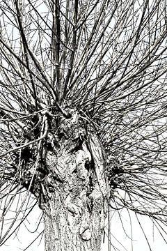 leafless von Yvonne Blokland