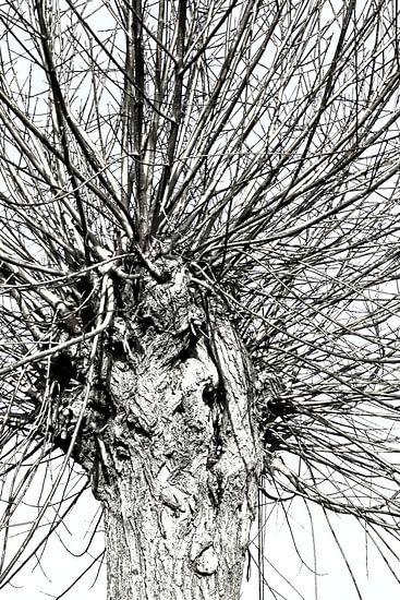 leafless van Yvonne Blokland