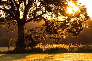 Le soleil levant à travers l'arbre sur Devlin Jacobs