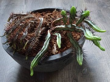 Kamerplant: SciFi Cactus 2-5 von MoArt (Maurice Heuts)