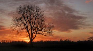 Baum allein bei Sonnenaufgang von Moetwil en van Dijk - Fotografie
