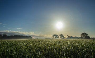 Graanveld van Jeroen Maas