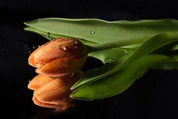 Tropfen auf die Tulpe! von As Janson
