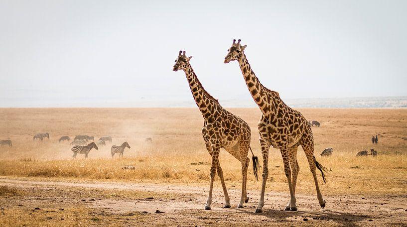 Giraffen op de Masai Mara van Van Renselaar Fotografie