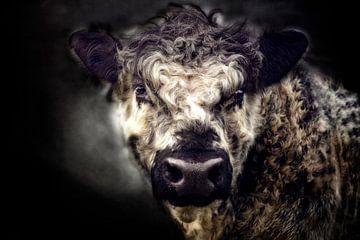 gekrulde stier van Claudia Moeckel