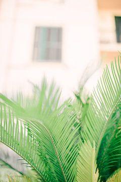 Palm van Laura de Roeck