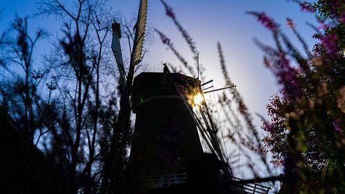 Molen en bloemen in Winsum tijdens zonsondergang (blue hour)