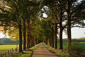 Lane met hoge bomen.