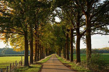 Lane met hoge bomen. van