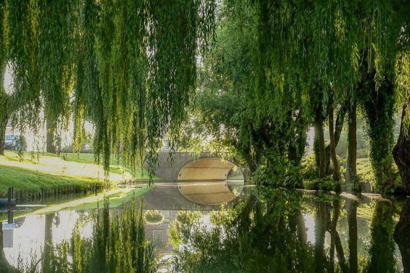 Bomen in Katwijk aan de Rijn van Dirk van Egmond