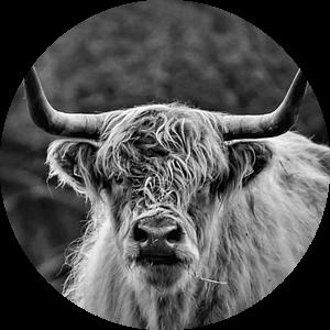 Schotse Hooglander in zwart wit van Karin Bazuin