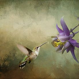 Vliegende Kolibrie Vogel met Paarse Akelei Bloem van Diana van Tankeren