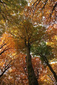 Autumn trees van Joyce Beukenex