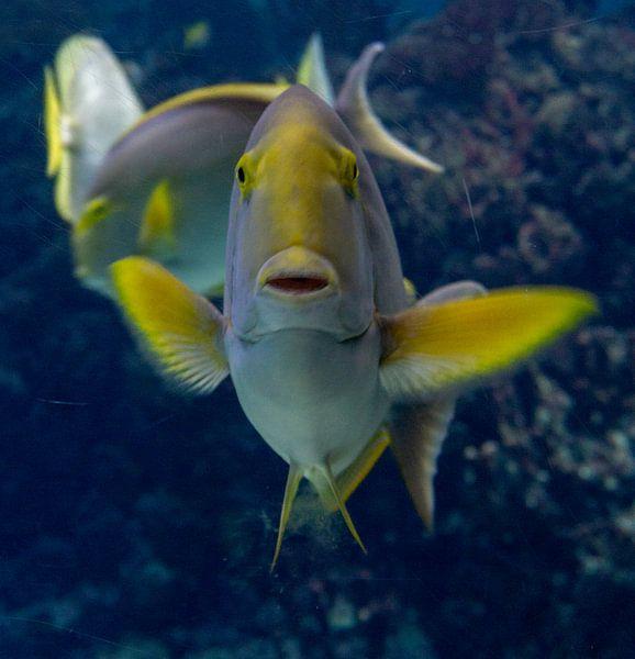 Tropische Fischhaltungen. von Anjo ten Kate