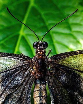 Nahaufnahme tropischer Schmetterling von Van Keppel Studios