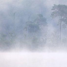 Les forêts et les marais d'Oisterwijk sur Esmeralda holman