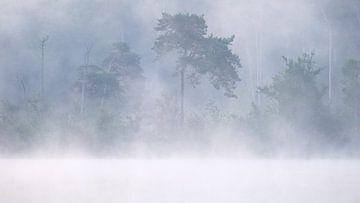 Wälder und Moore von Oisterwijk von Esmeralda holman