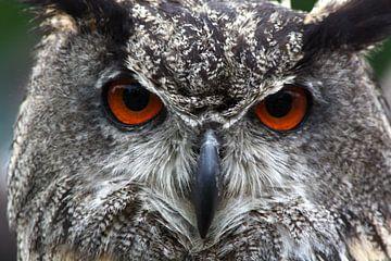 eagle-owl von Gert Hilbink