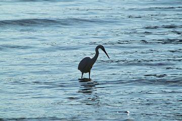 Lago van Iris van Bokhorst