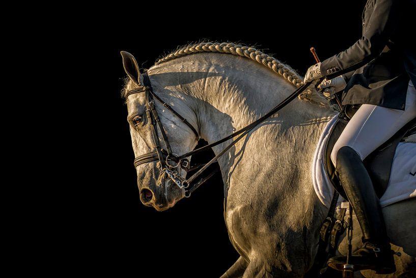 Andalusian perla blanca van Natasja Claessens