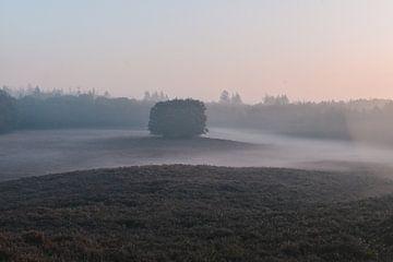 Nebliger Morgen auf der Veluwe von Jisca Lucia