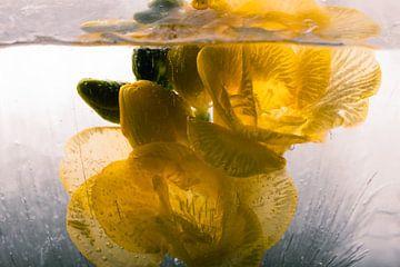 Gele fresia in ijs 2 van Marc Heiligenstein