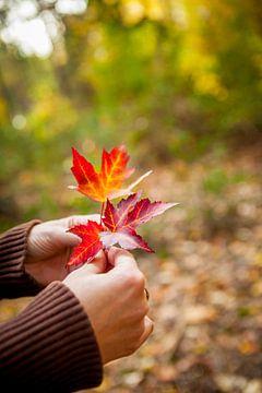 Vrouwenhanden houden enkele herfstbladeren vast van Marcel Bakker