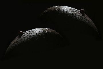 Makrophotographie Obstschale: Äpfel (Brüste mit Wassertropfen) von Cor Heijnen