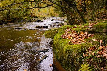 herfstbladeren op het mos sur Bas Wolfs