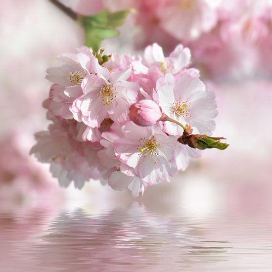 Frühling van Violetta Honkisz