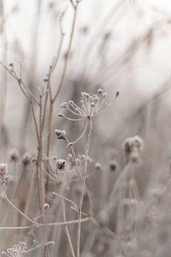 Bloemenweide met winters tintje van Sandra Koppenhöfer