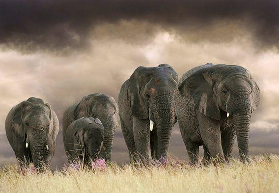 Olifanten op rij
