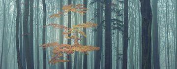 Magisch bos in het panorama van Tobias Luxberg