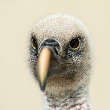 Vulture von Rob Smit