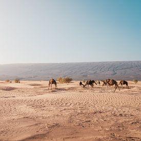 Marokko sahara 9 von Andy Troy