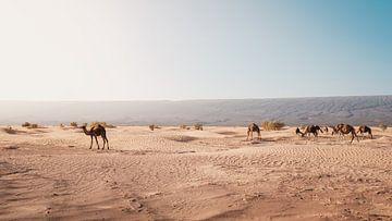 Marokko sahara 9