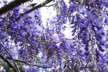 Abondance florale sur Martine Affre Eisenlohr