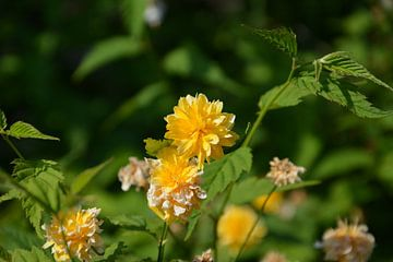 Yellow flowers  van Tessa van Giessen