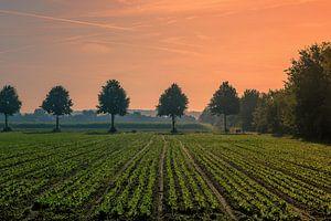 Avondrood boven een weiland bij landgoed Visdonk (Roosendaal) van