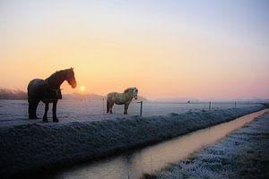 Texel Landschap 008 van Starworks Lien van der Star