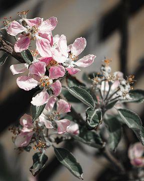 Blüte in sanften Tönen und Farbpop von Daphne Groeneveld