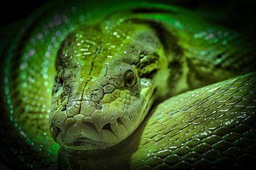 Groene slang close up van voor van Faucon Alexis
